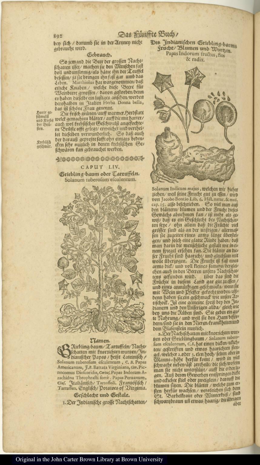[left] Griebling-baum oder Tartuffeln. Solanum tuberosum esculentum. [right] Des Indianischen Griebling-baums frucht/Blumen und Wurtzen. Papas Indorum fructus, flos & radix.