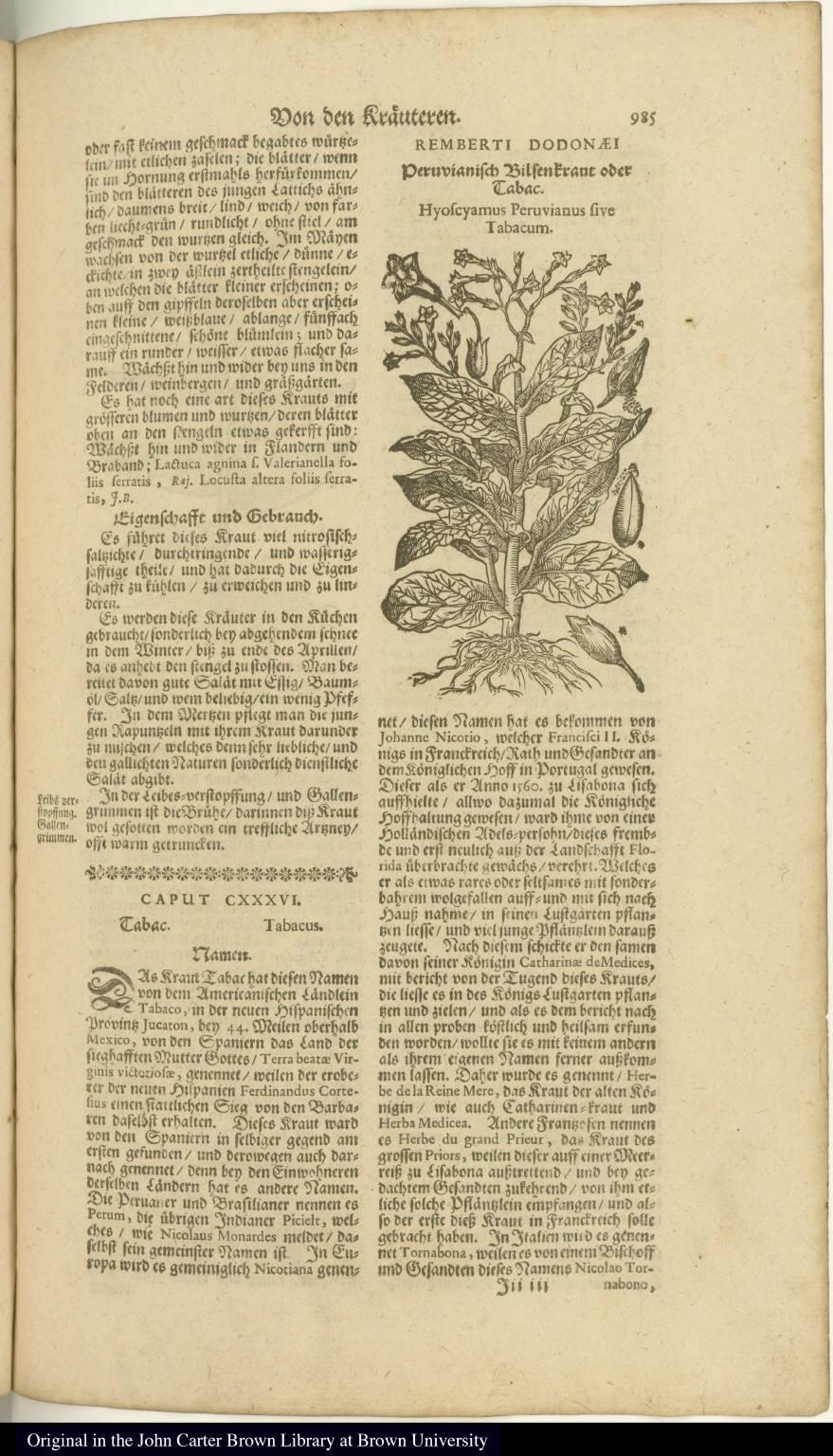 Peruvianisch Bilsenkraut oder Tabac. Hyoscyamus Peruvianus sive Tabacum.