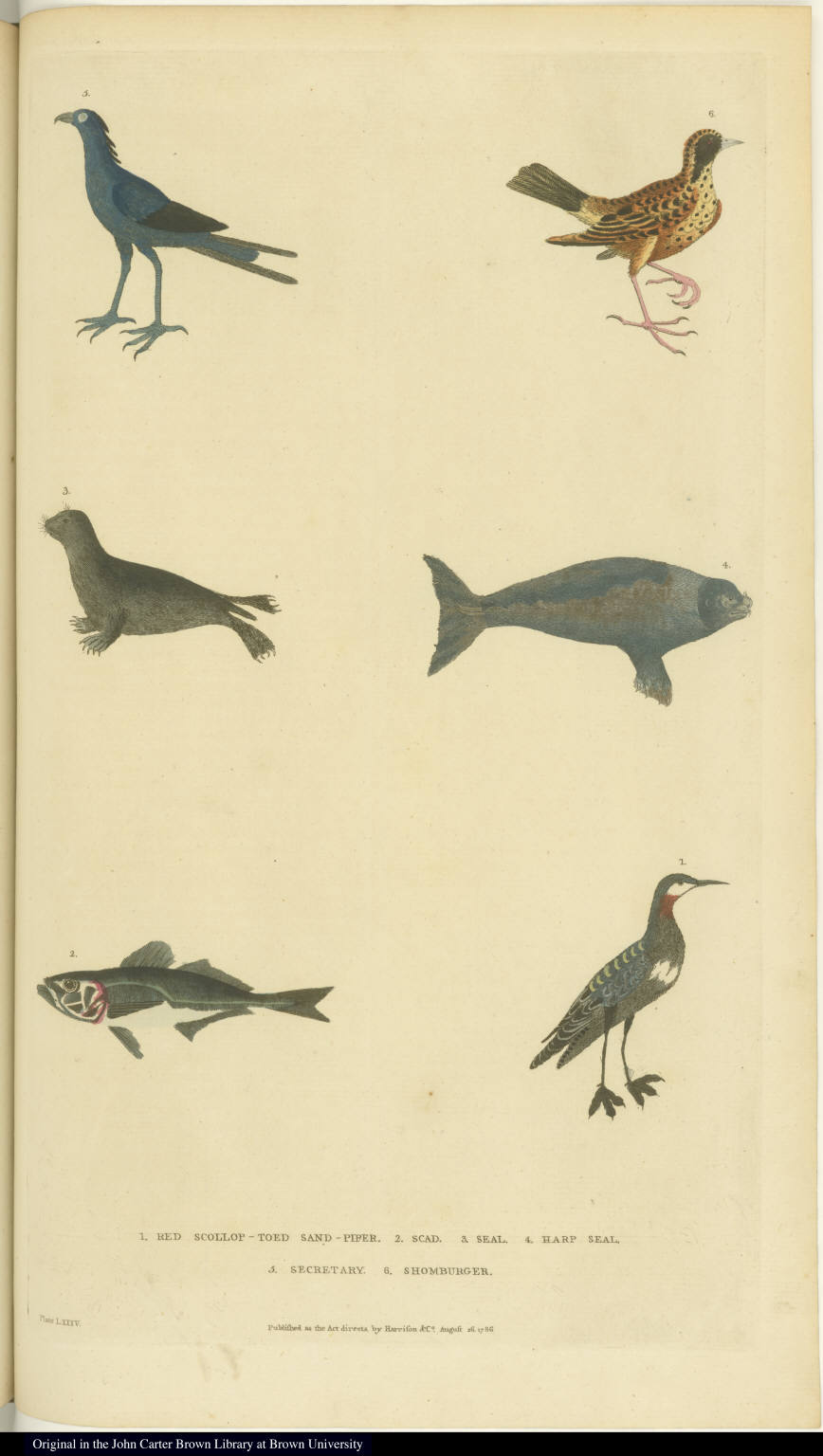 [Various birds, seals, and a scad fish]