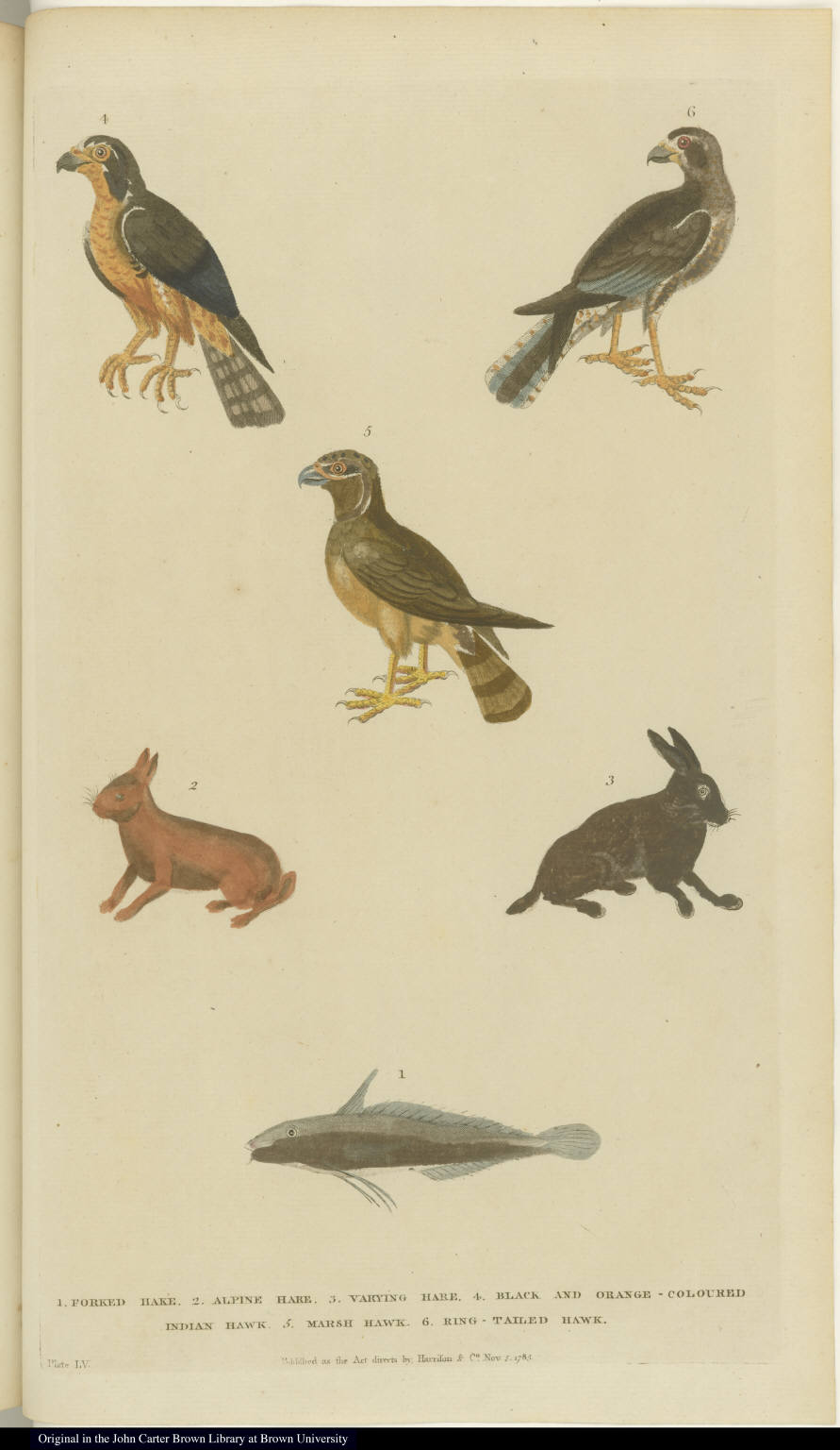 [Birds, hares, and fish]