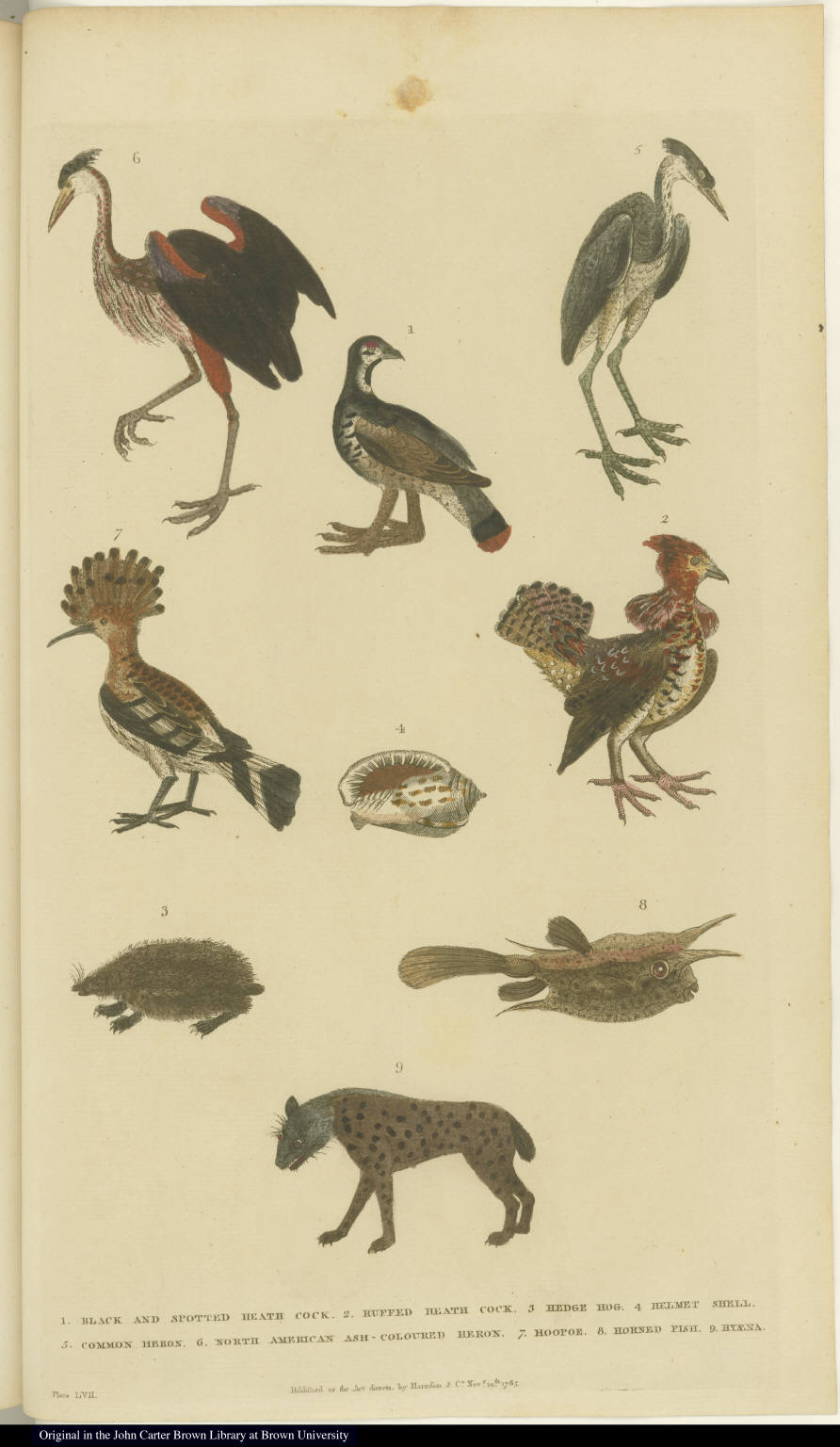 [Birds, shell, hedgehog, hyena, and fish]