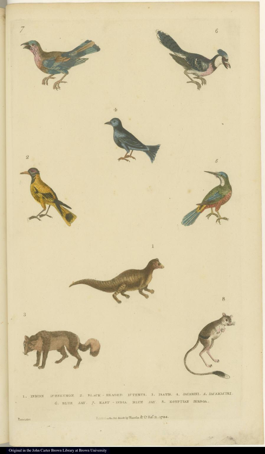 [Birds and small mammals]