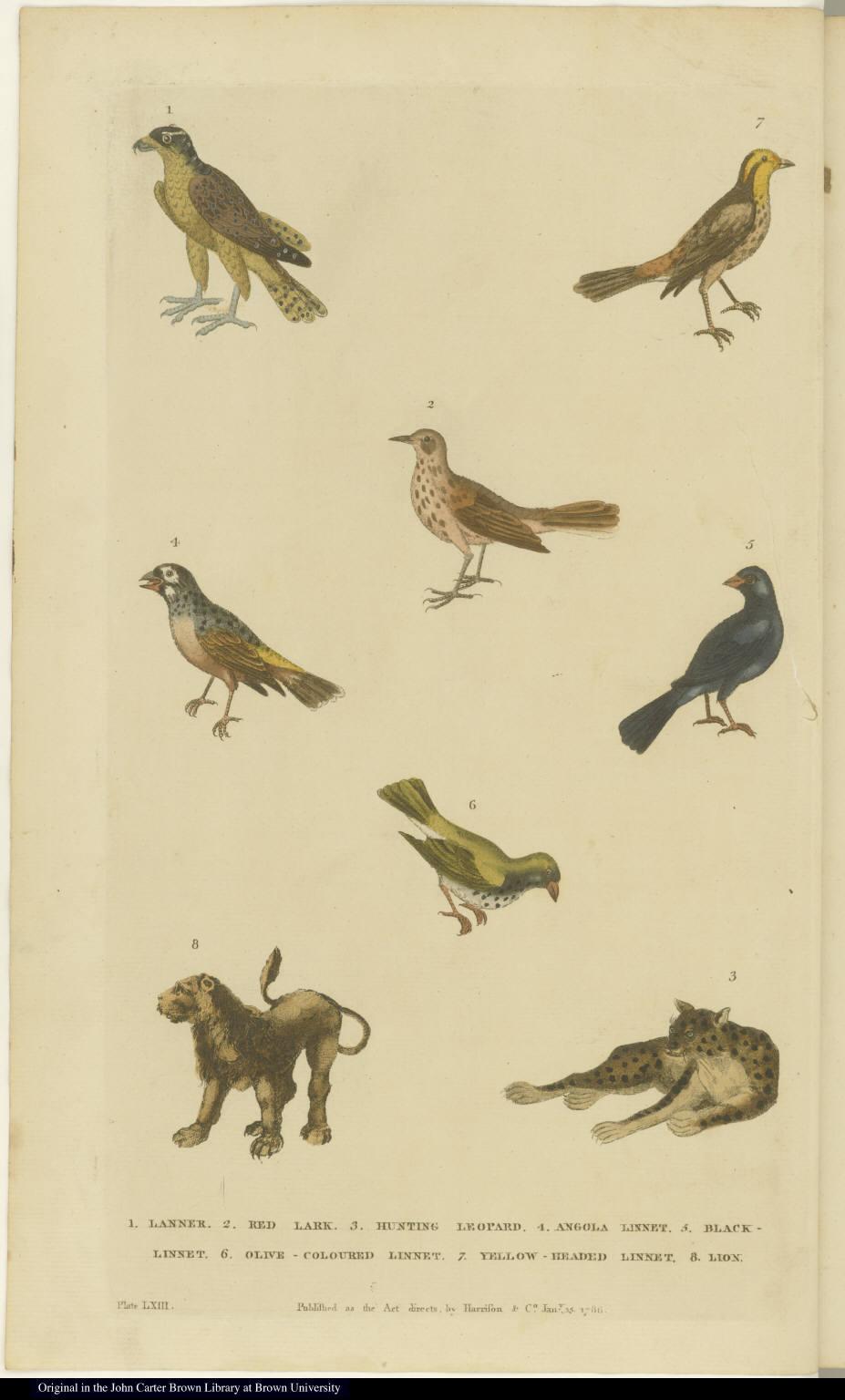 [Birds, lion, and leopard]