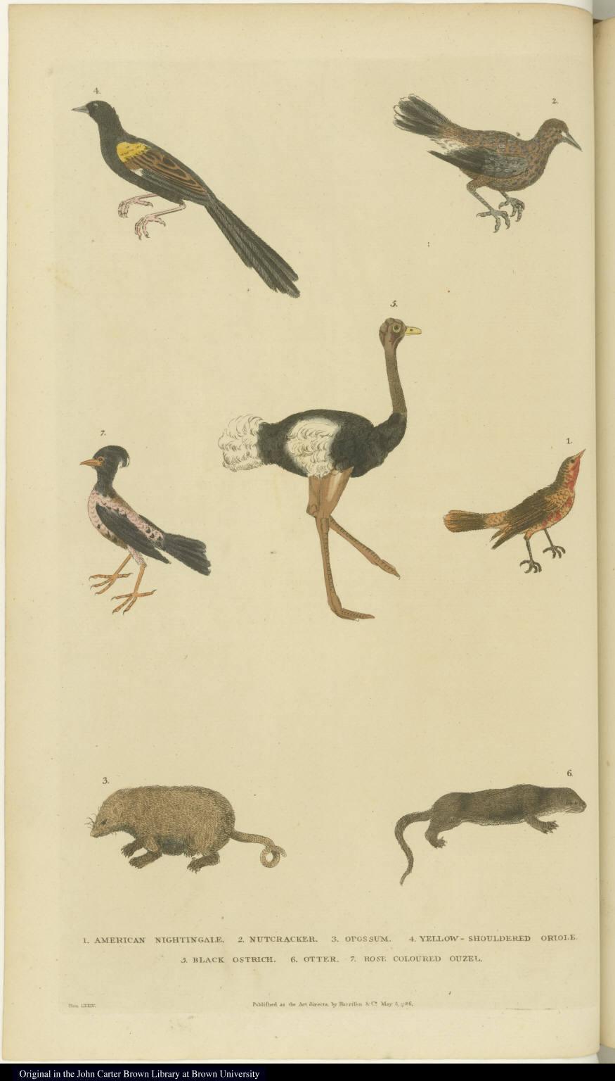 [Various birds, an opossum, and an otter]