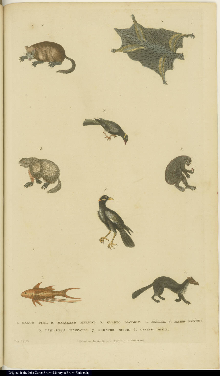 [Fish, birds, and small mammals]
