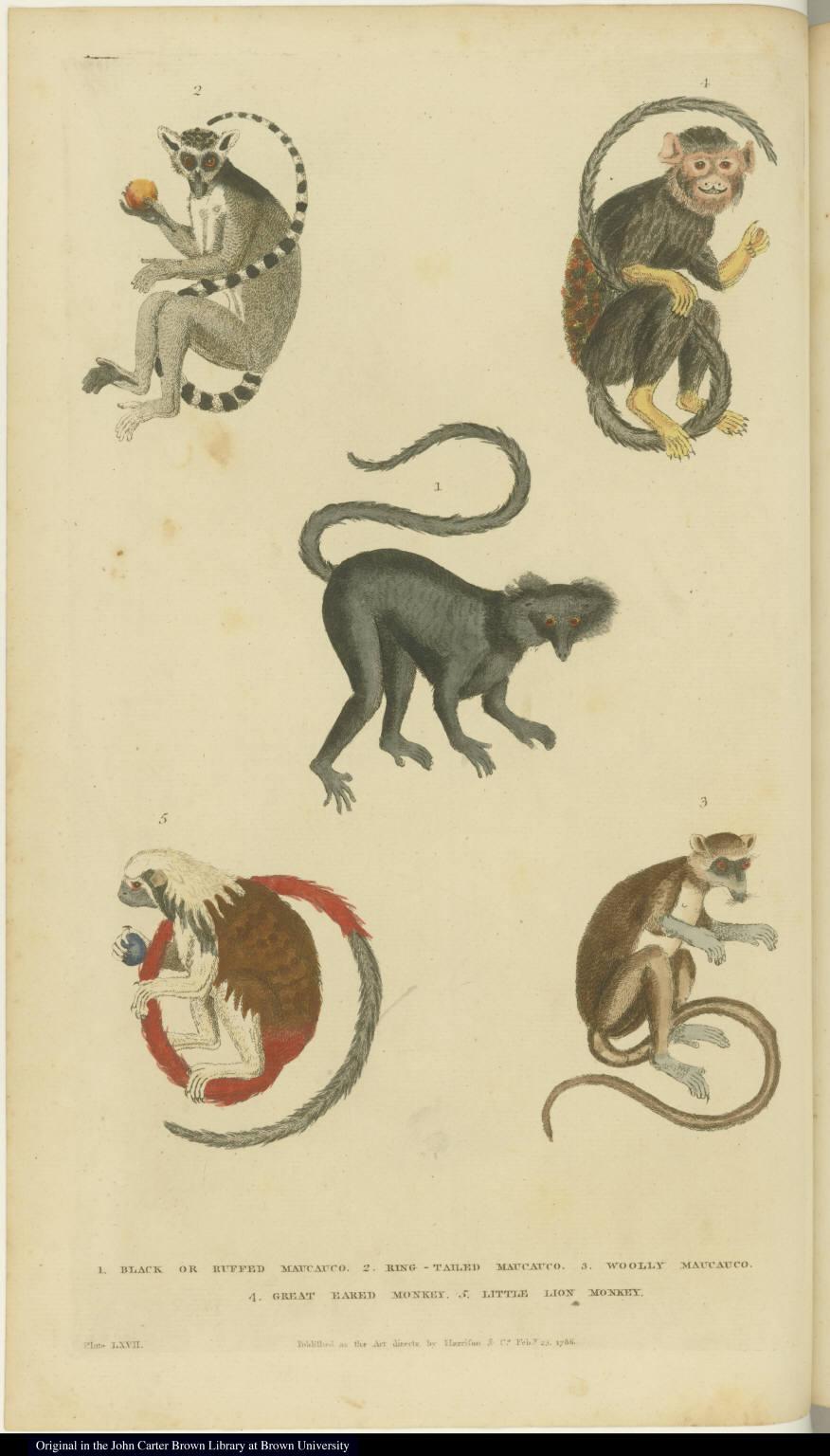 [Various monkeys and lemurs]