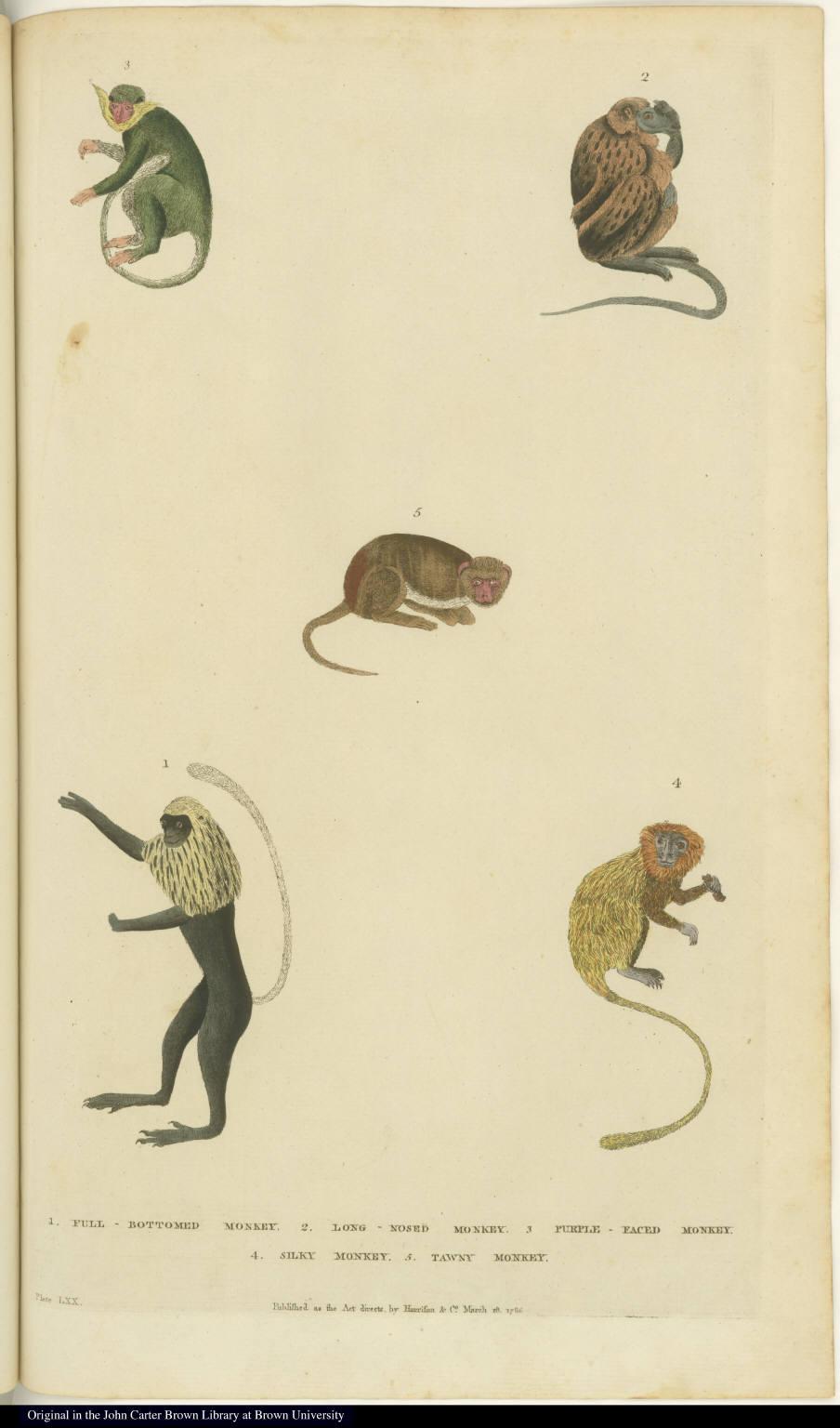 [Various monkeys]