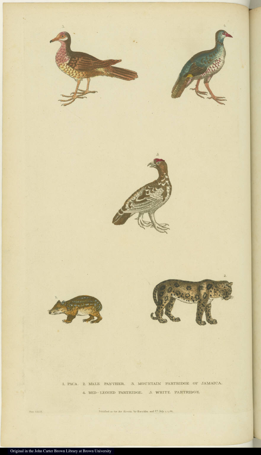 [Various birds, a paca, and a panther]