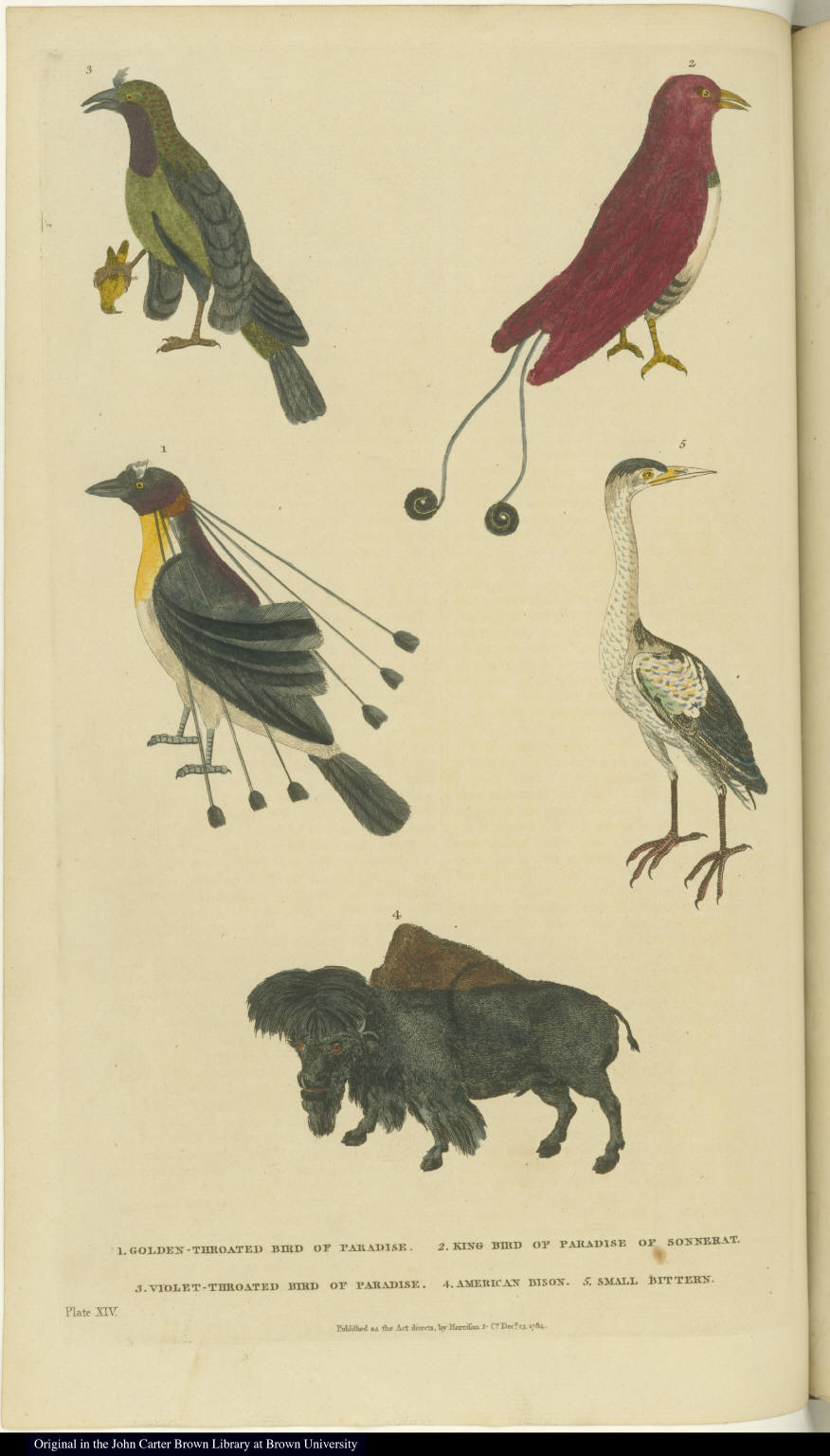 [Various birds and a bison]