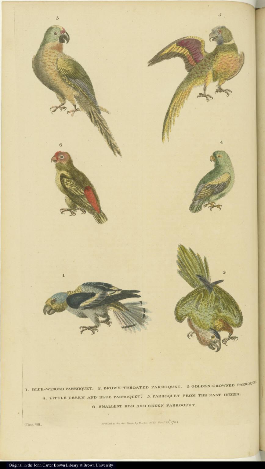 [Various parakeets]