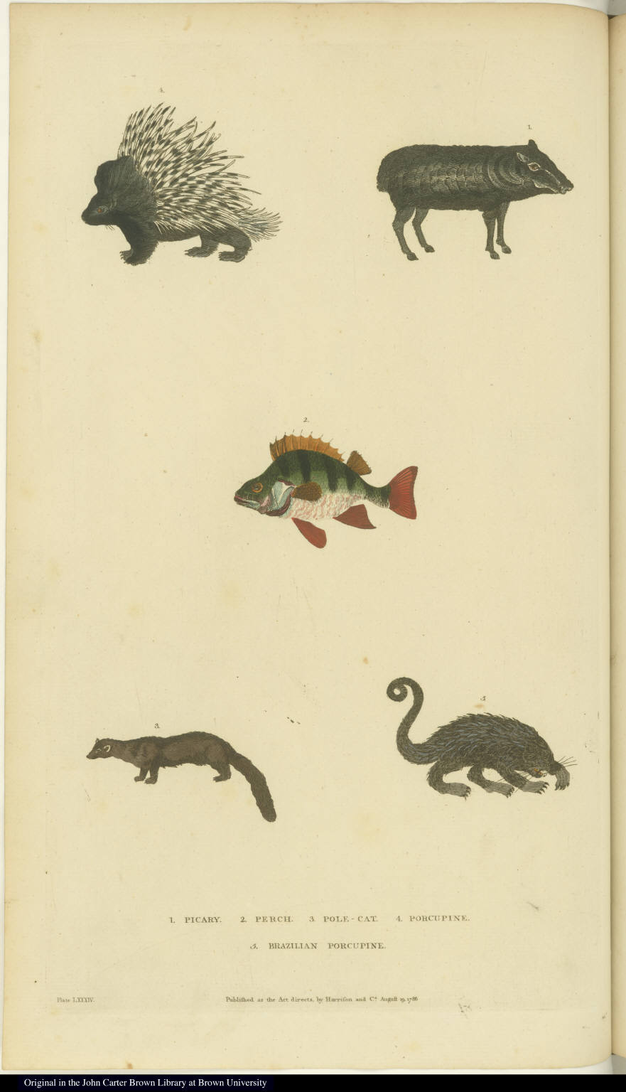 [Peccary, perch, polecat, and porcupines]