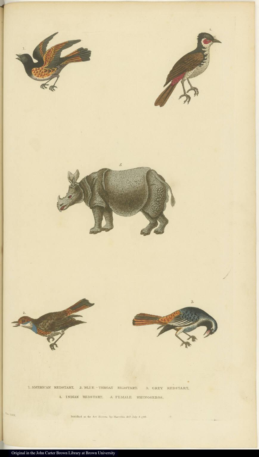 [Various birds and a rhinoceros]