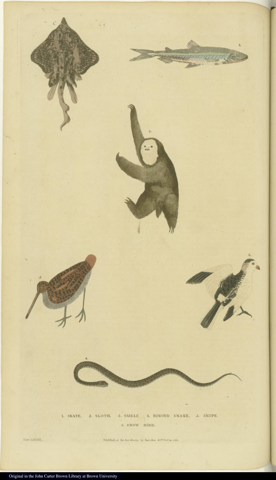 [Various birds, fish, a snake, and a sloth]
