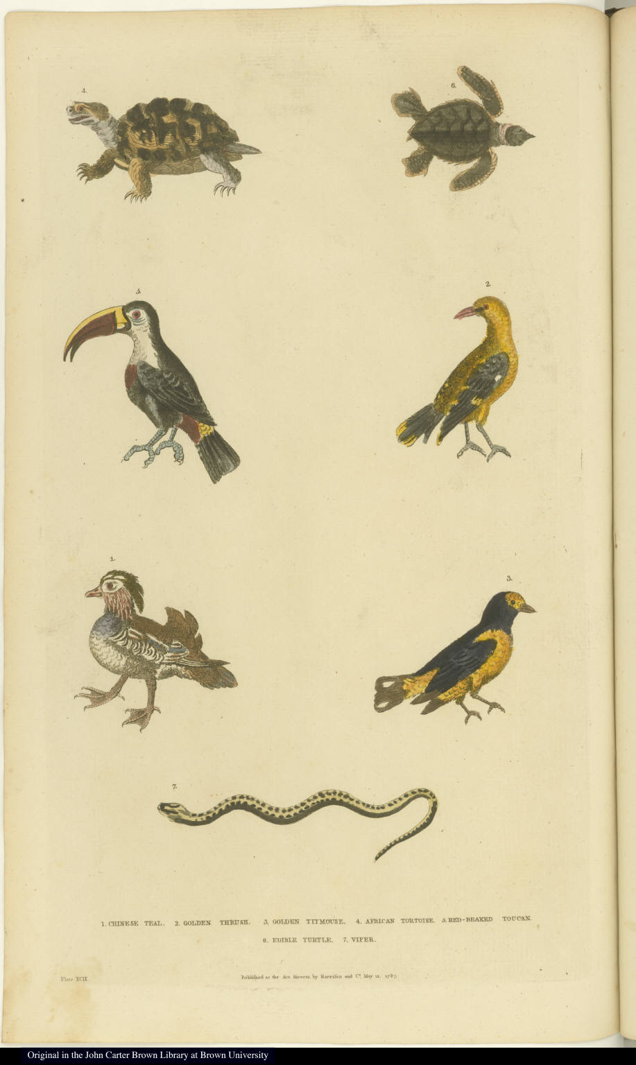 [Various birds, a snake, and tortoises or turtles]