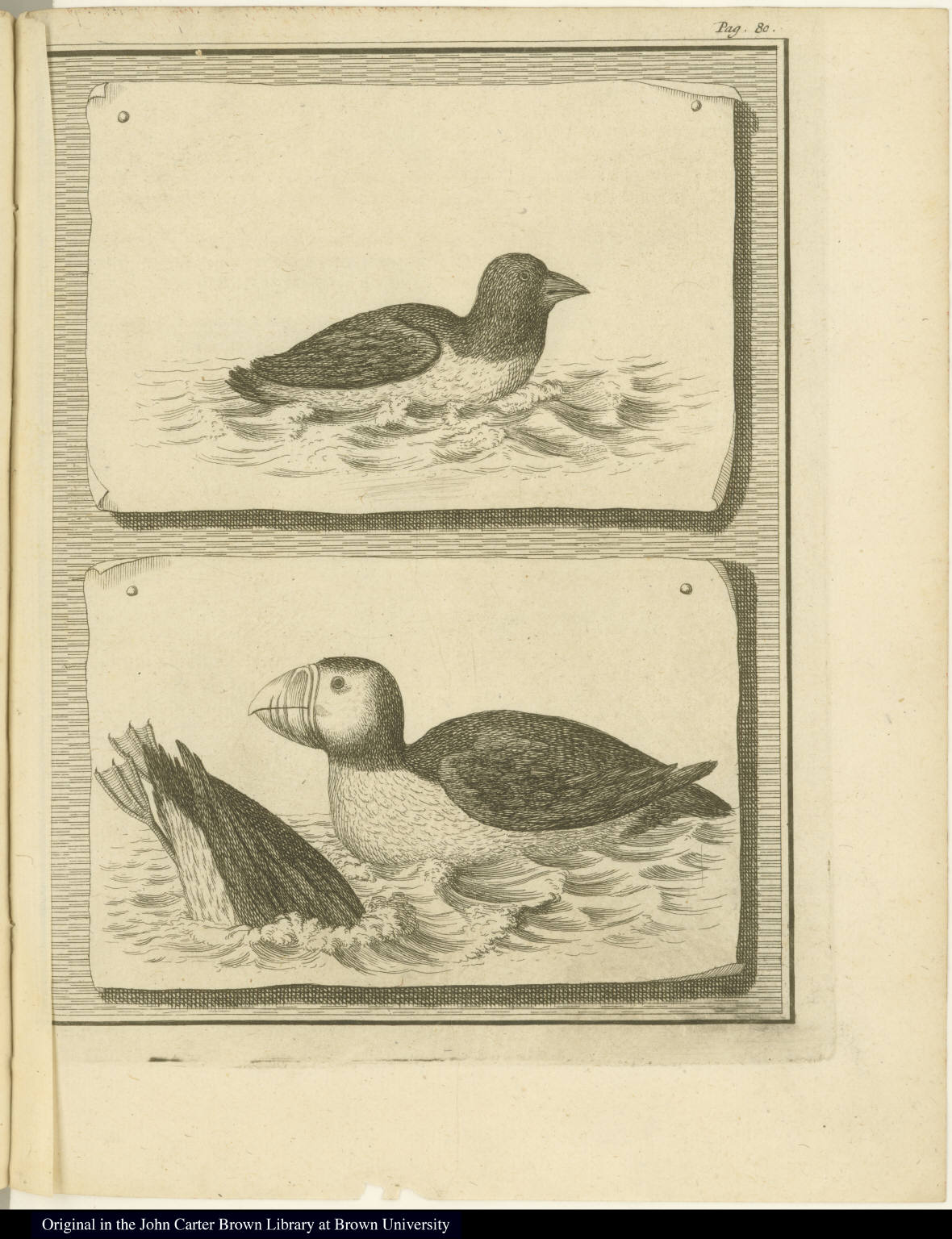 [Puffin and seabird]