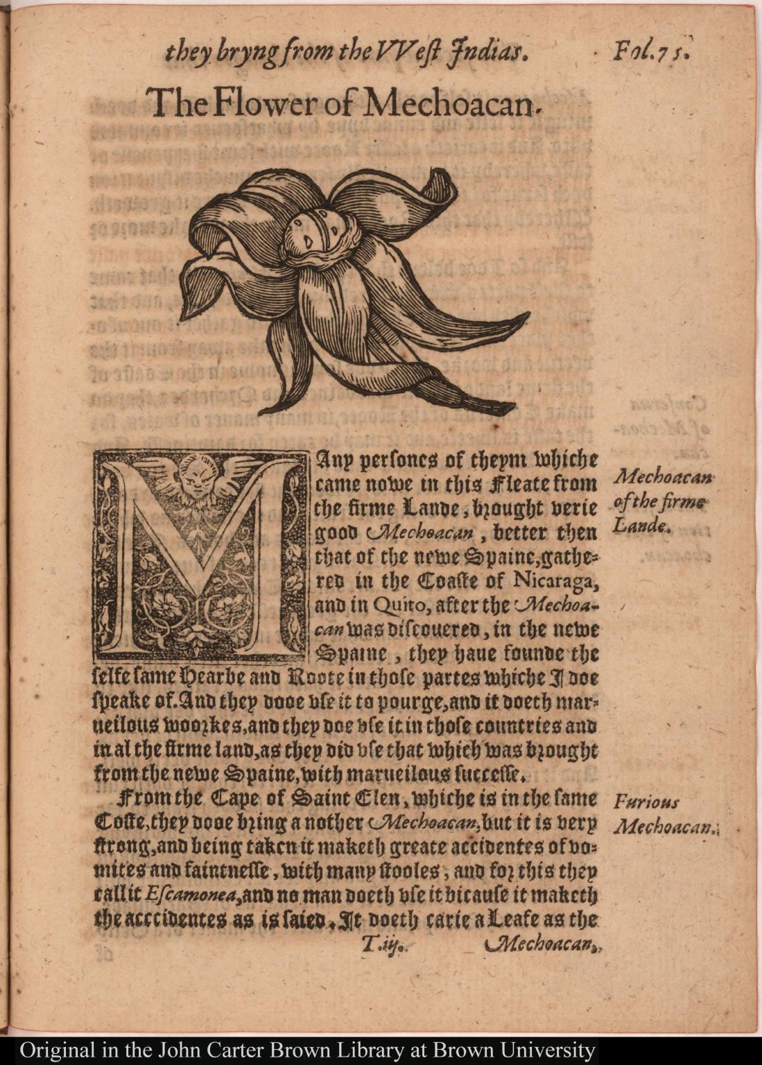 [The Flower of Mechoacan.]