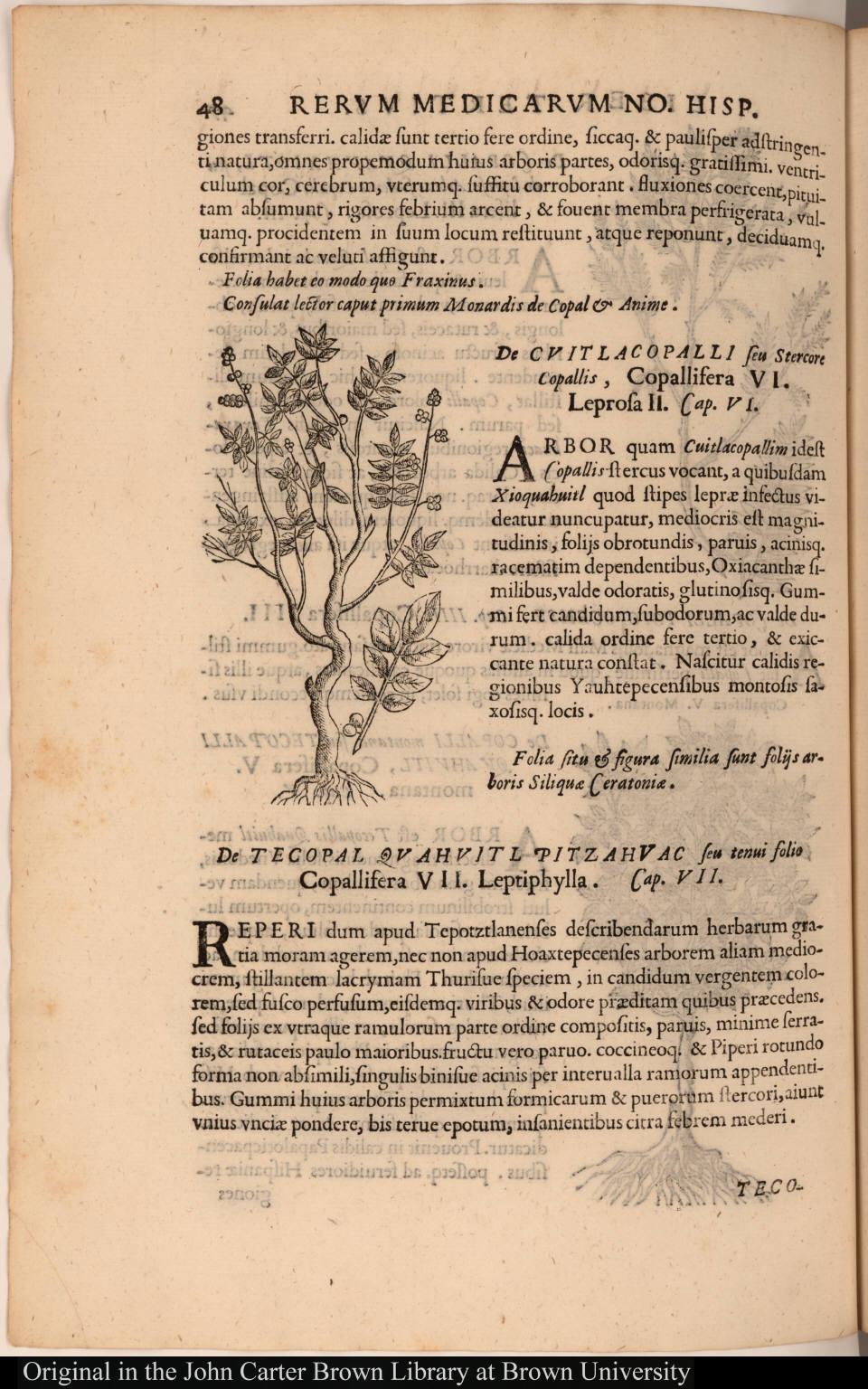 [De Cuitlacopalli seu Stercore Copallis, Copallifera VI. Leprosa II.]