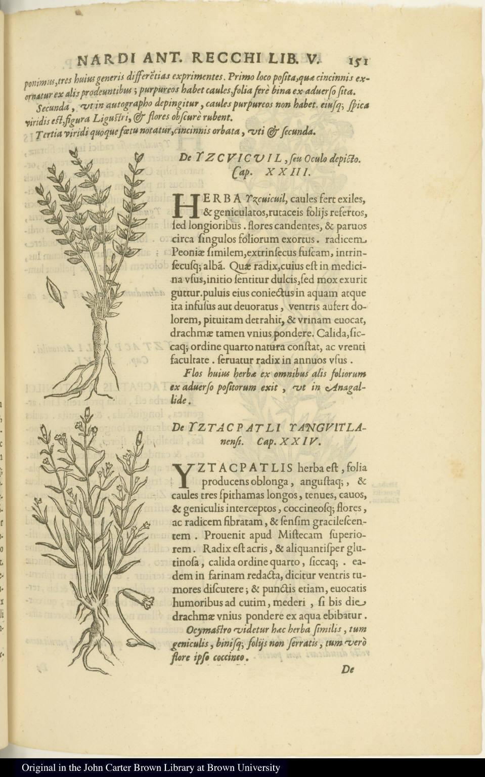 [top] [De Yzcuicuil, seu Oculo depicto.] [bottom] [De Yztacpatli Yanguitlanensi.]
