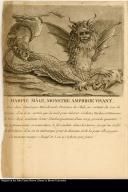Harpie Male, monstre amphibie vivant