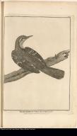 Blackbird of Port des Français.