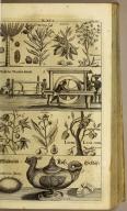[top] Arecca, Curcuma, cacao, mandi-hoca [upper middle] Mühl des Wurkel-Meels [lower middle] Bilder manidhoca Baum Ianipaba, LichiLum-Yen. [bottom] Maldivien Nuss-Geschir