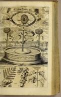 [top] Künstliche Blumen=Uhr. [bottom] Horn-Baum Hoitzmamaxalli Ost-Indischer Baum Macandou