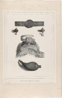 Ornement de Ceinture, Agrafes, Selle de femme et Tabatière (Islande)