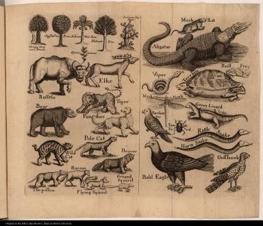 [Flora and fauna of North Carolina]