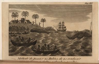 Methodo de pescar as Baléas, de as conduzir para terra, e dellas extrahir azeite.