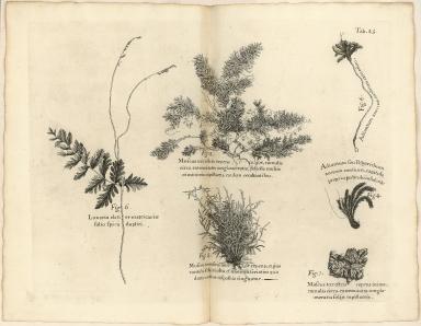 [Lichen and Mosses]