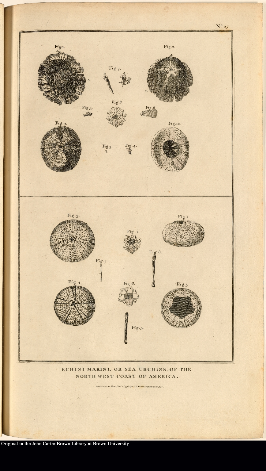 Echini Marini, or sea urchins, of the north west coast of America.